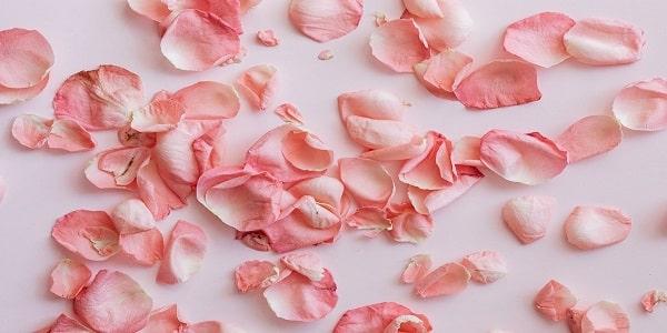 حب الورود عبر التاريخ