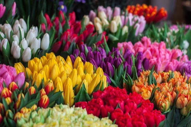 طرق الحفاظ على الورود الطبيعية