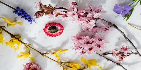 معنى ألوان الورود